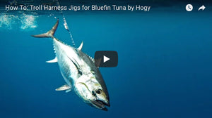 How-To: Trolling for Bluefin Tuna with Hogy Harness Jigs