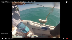 How-To: Sight Casting Cocoa Beach Cobia