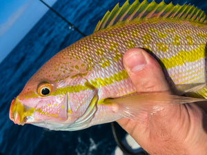 Best Lures For Yellowtail Snapper