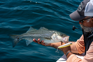 How-To: Casting to Topwater Stripers off of Provincetown