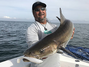 Ten Tips For Casting To Cobia On Manta Rays