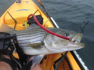 Best Tube and Worm Rods for Kayak Striped Bass Fishing