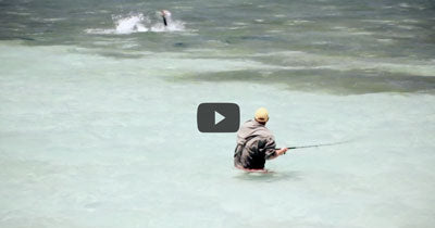 Video: Flats Tarpon