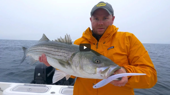 Video: Cape Cod Pro Tail Stripers