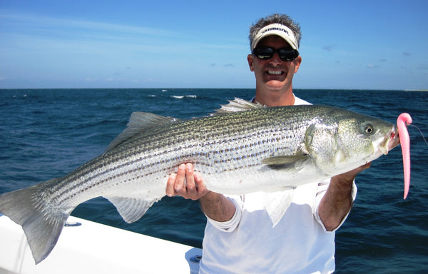 Hogy Lures Topwater Striper Long Island Sound