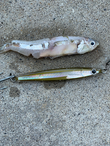 epoxy jig lure rainbait and bay anchovy match the hatch