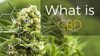 What is CBD and What are the Benefits?