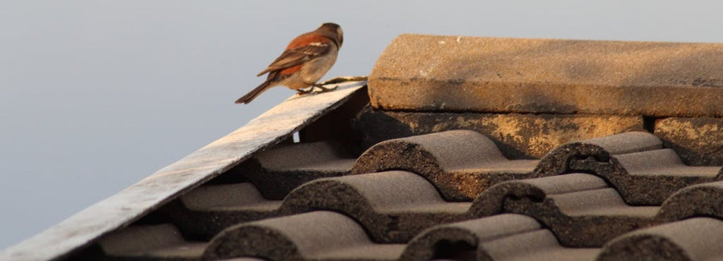 How To Stop Birds From Pecking On Your House | WhirlyBird