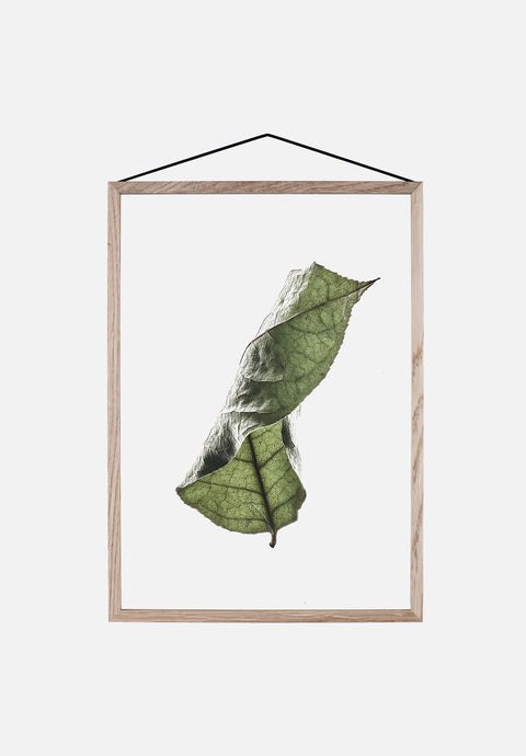 Floating Leaves No.4