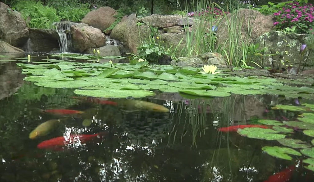 Building Backyard Ponds best how-to guide to building a backyard pond – kinetic water features