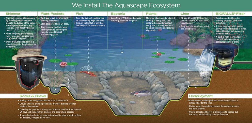 aquascape ecosystem cross-section view with callouts