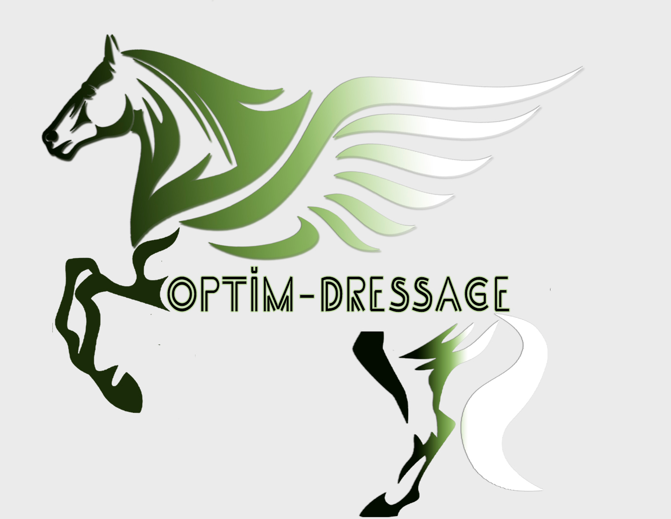 optim dressage