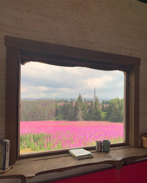fireweed field viewed from inside through a cabin window
