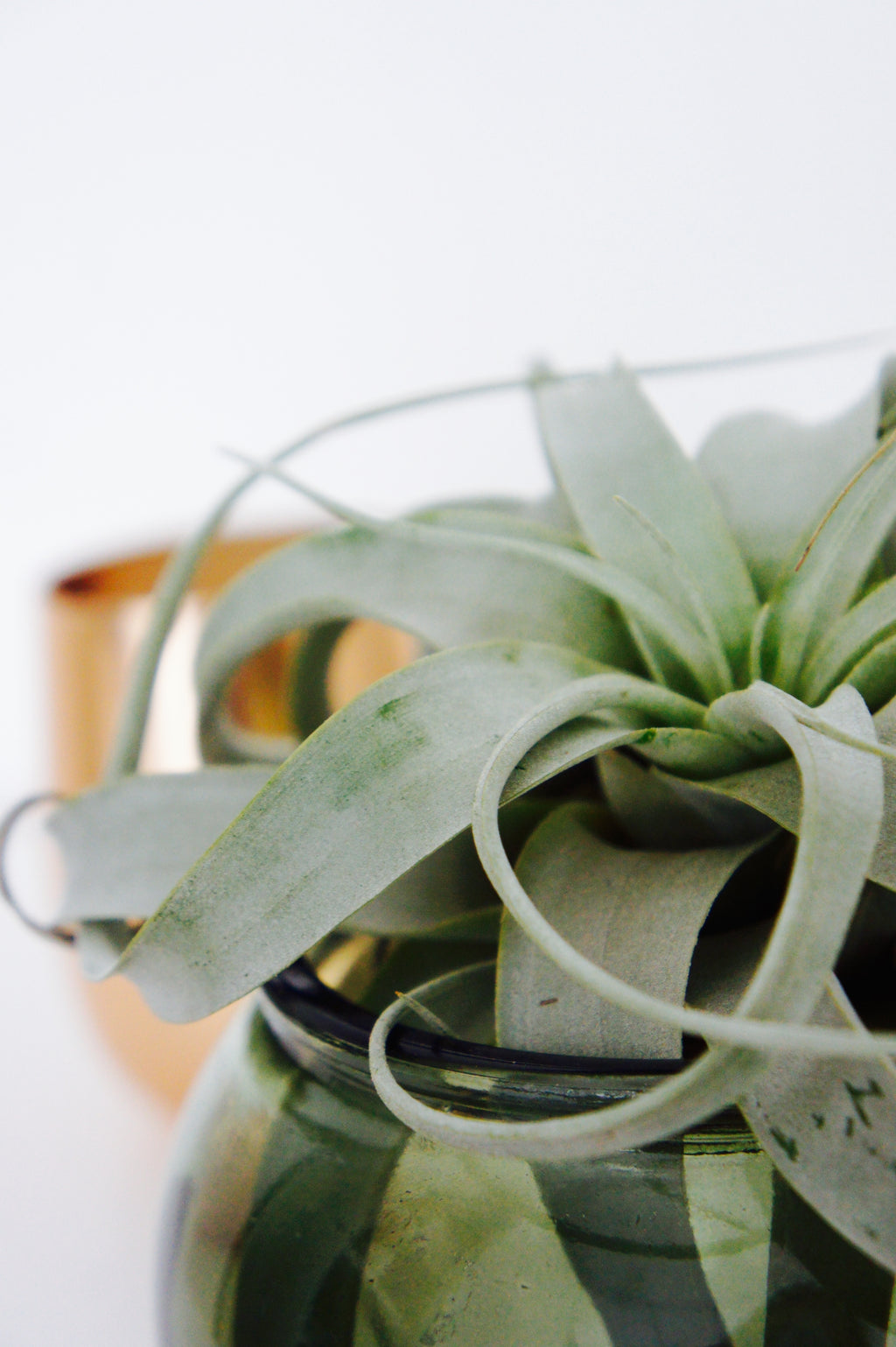 Green Airplant Vase
