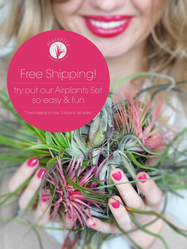 Free shipping offer of 3 Tillandsia Airplants