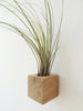 Cube air plant design holder with Tillandsia Juncea on the wall
