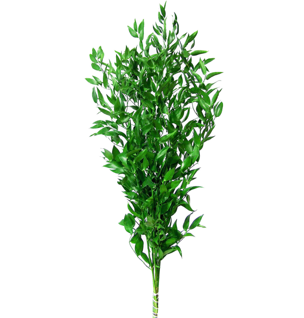 Green Italian Ruscus FloralSection