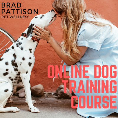 Brad Pattison's Online Dog Training Course