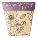 Sow n Sow Swan River Daisy Gift of Seeds