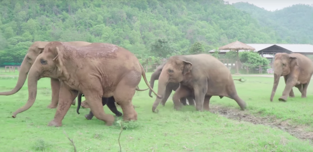 [Video] Elephant Herd Runs to Greet Rescued Baby Elephant
