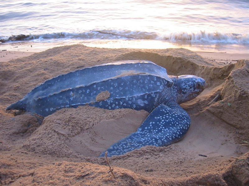 Trinidad is Protecting Its' Sea Turtle Nesting Grounds