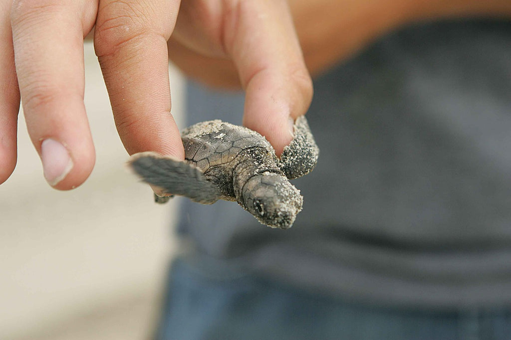 The Story of Rana, the Loggerhead Turtle