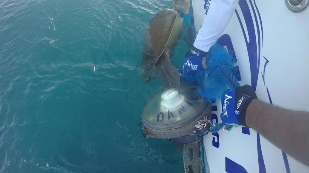 How They Saved a Sea Turtle's Life and How You Can Too