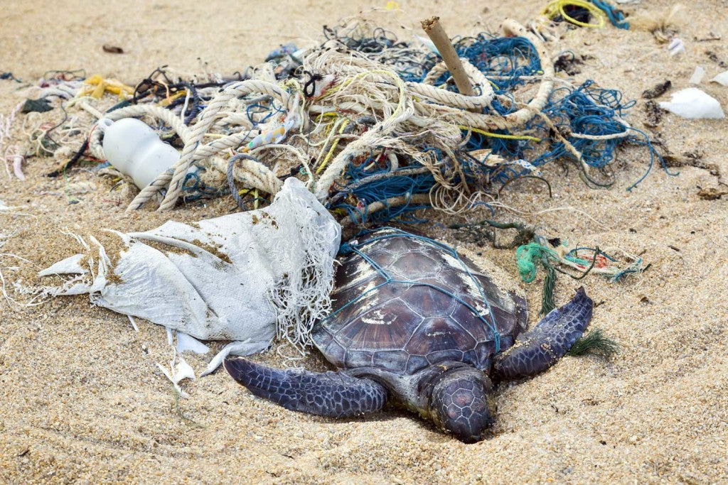 4 Endangered Sea Turtles You May Never See