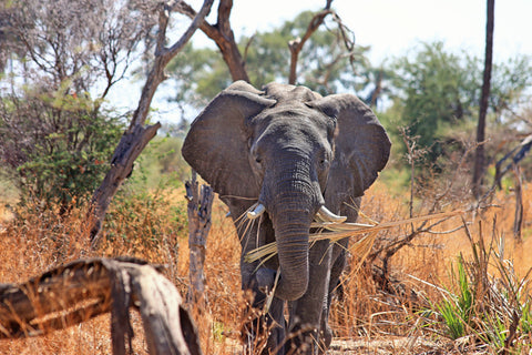 elephant-kills-poacher-image