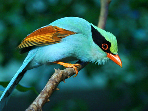 exotic birds usa trafficking wildlife