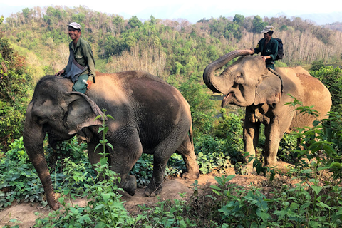 riding_elephant_jungle_endangered_blog