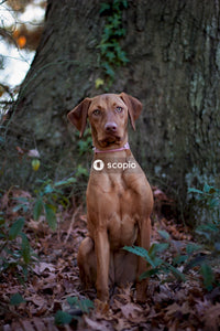 Brown short coated dog in forest
