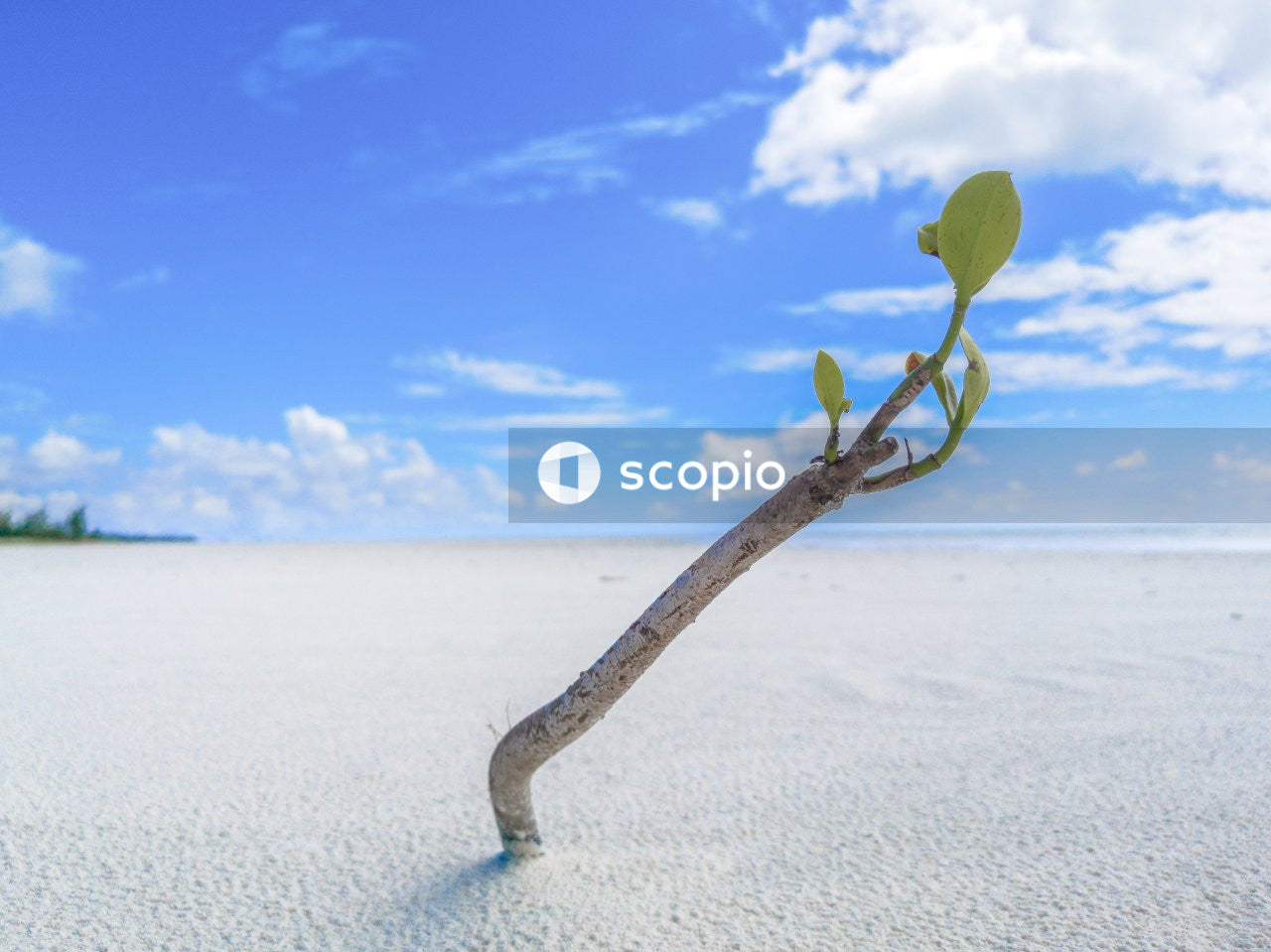 Shoot of plant growing in sand at beach