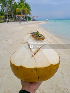 Yellow coconut shell on beach