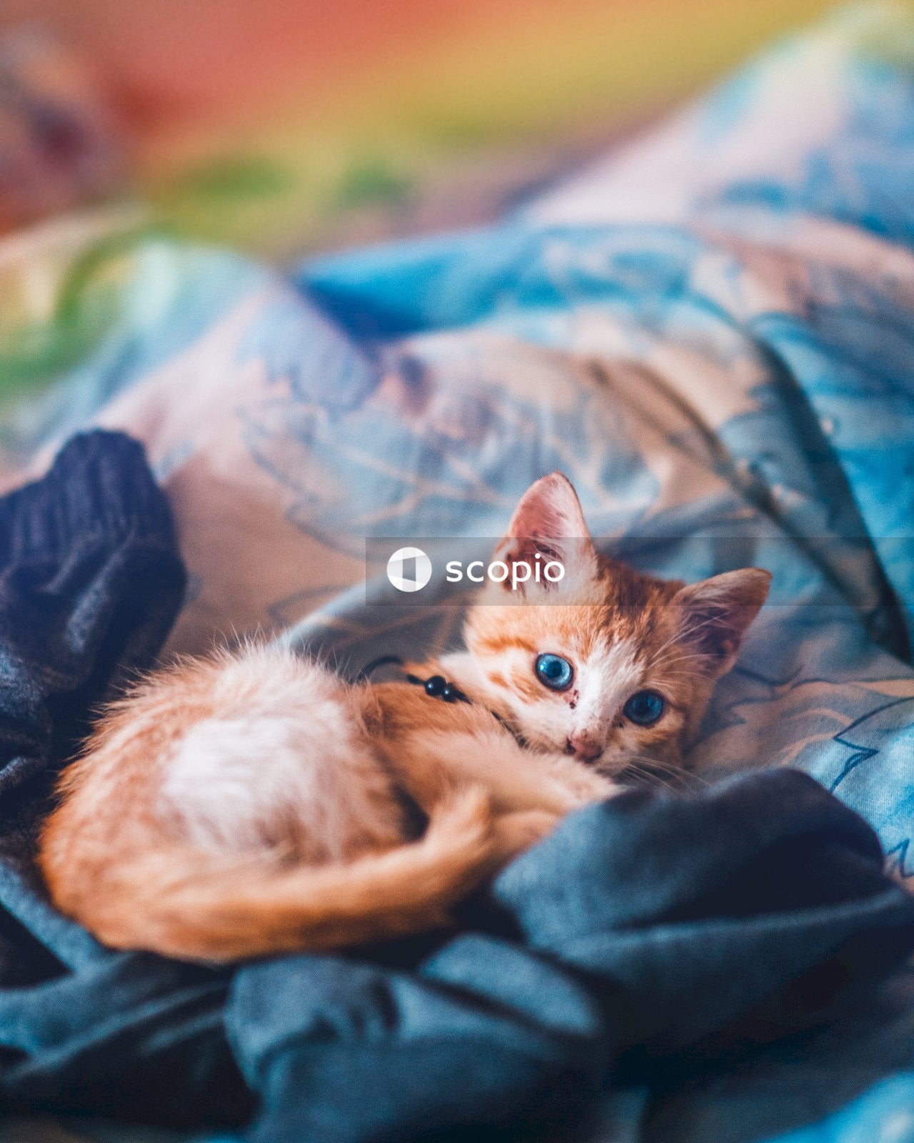 Kitten on bed
