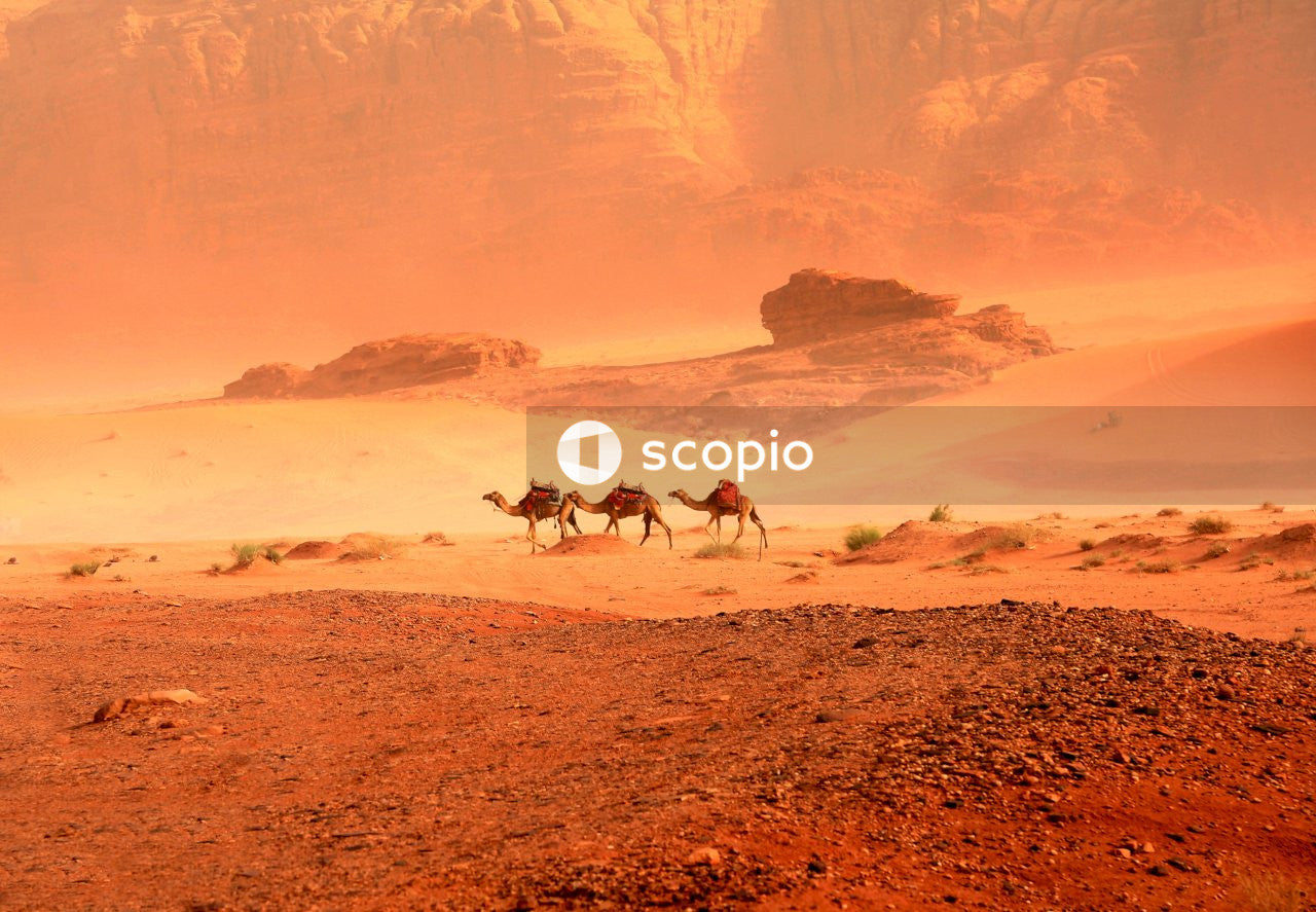 Three horses running on brown sand