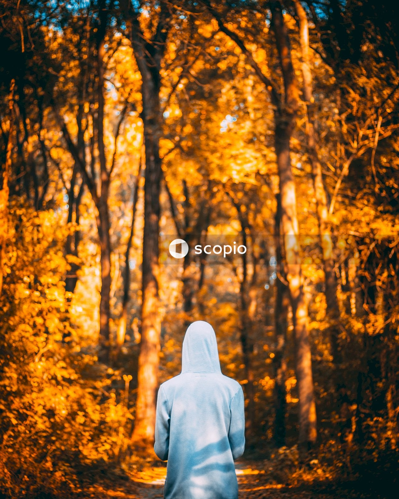 Person in gray hoodie standing in forest