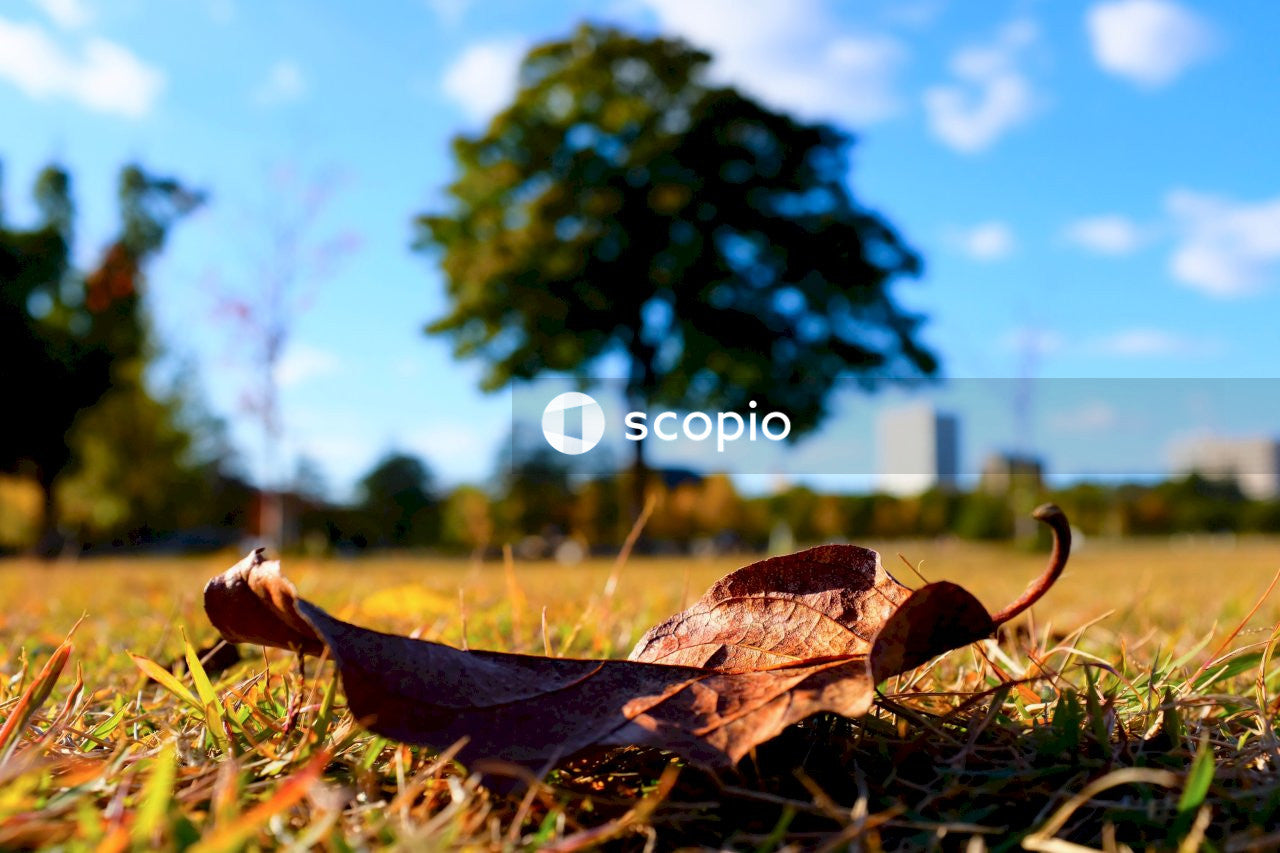 Brown dried leaf on ground