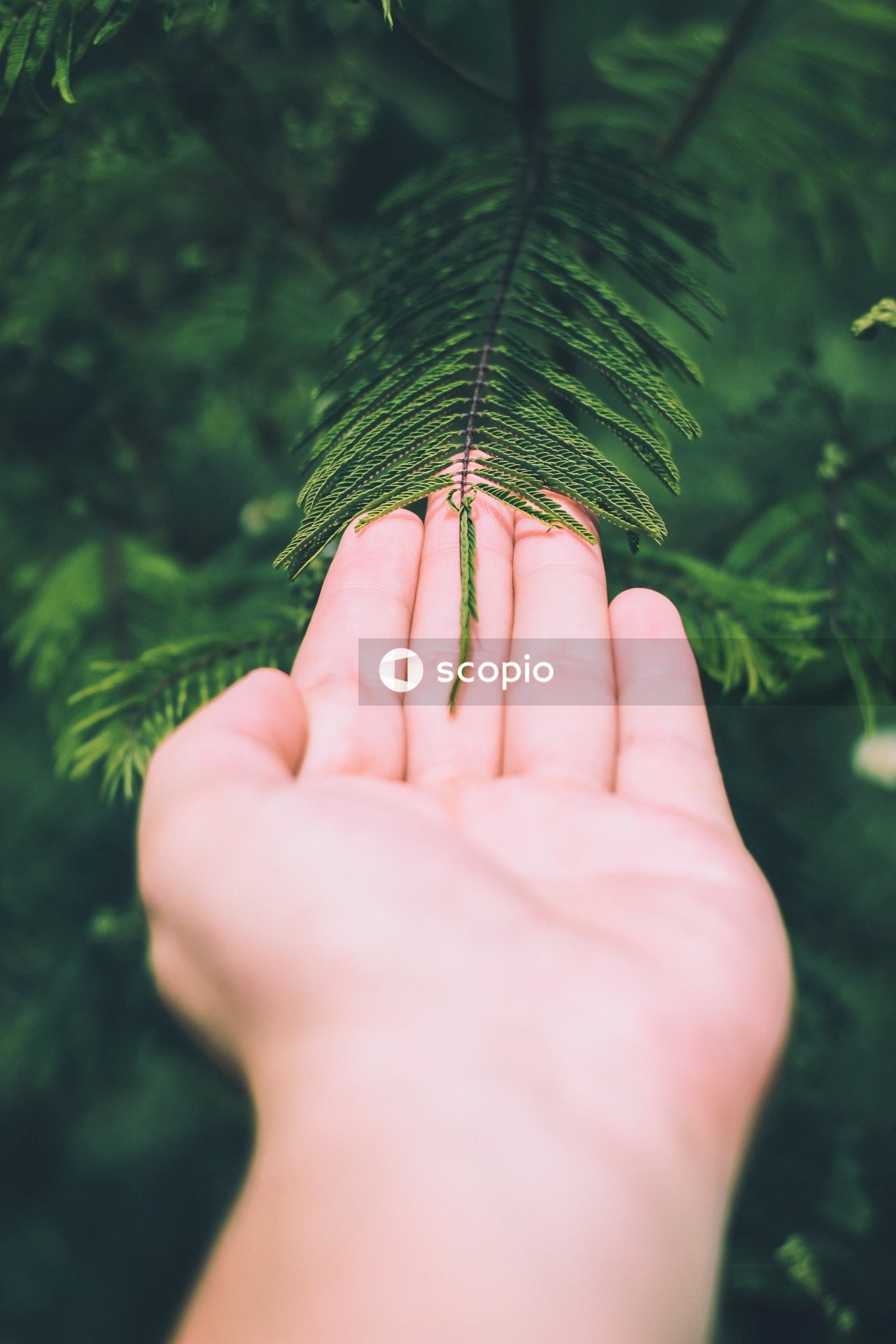 Person touching fern plants