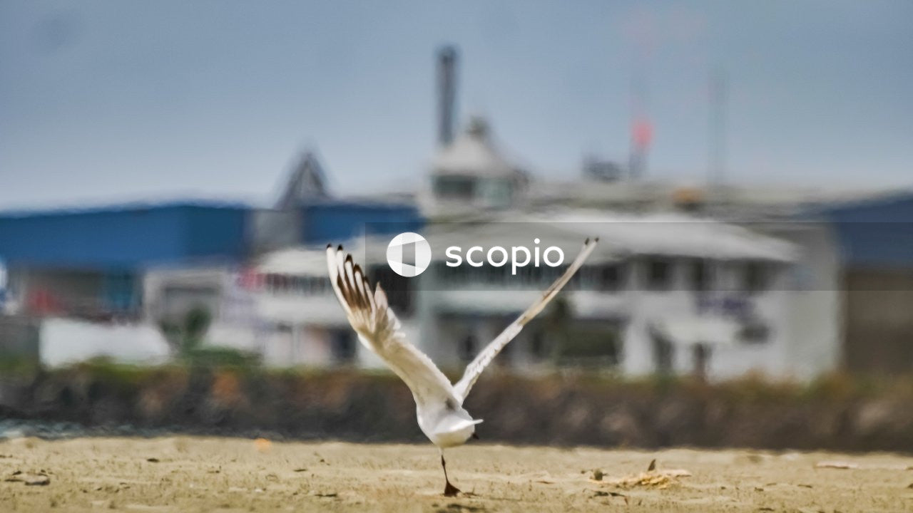 White bird flying over the sea