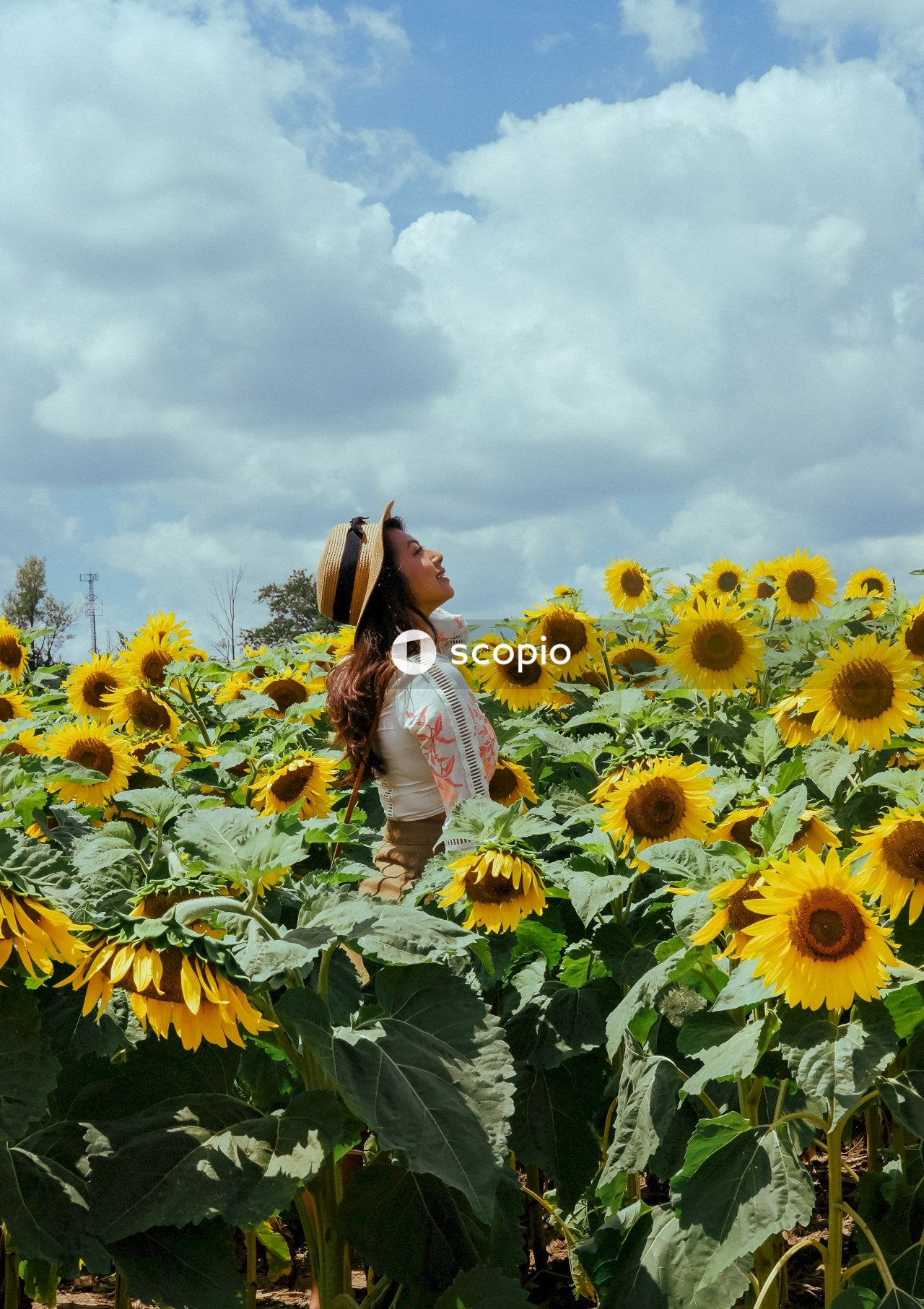 Woman in white long sleeve shirt standing on sunflower field under white clouds and blue sky