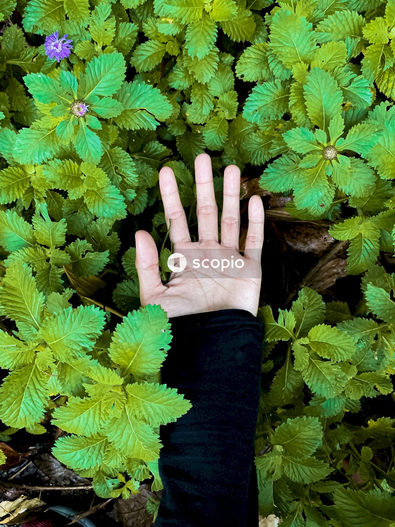 Person holding green-leafed plants