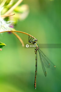 Green and black dragonfly perched on plant