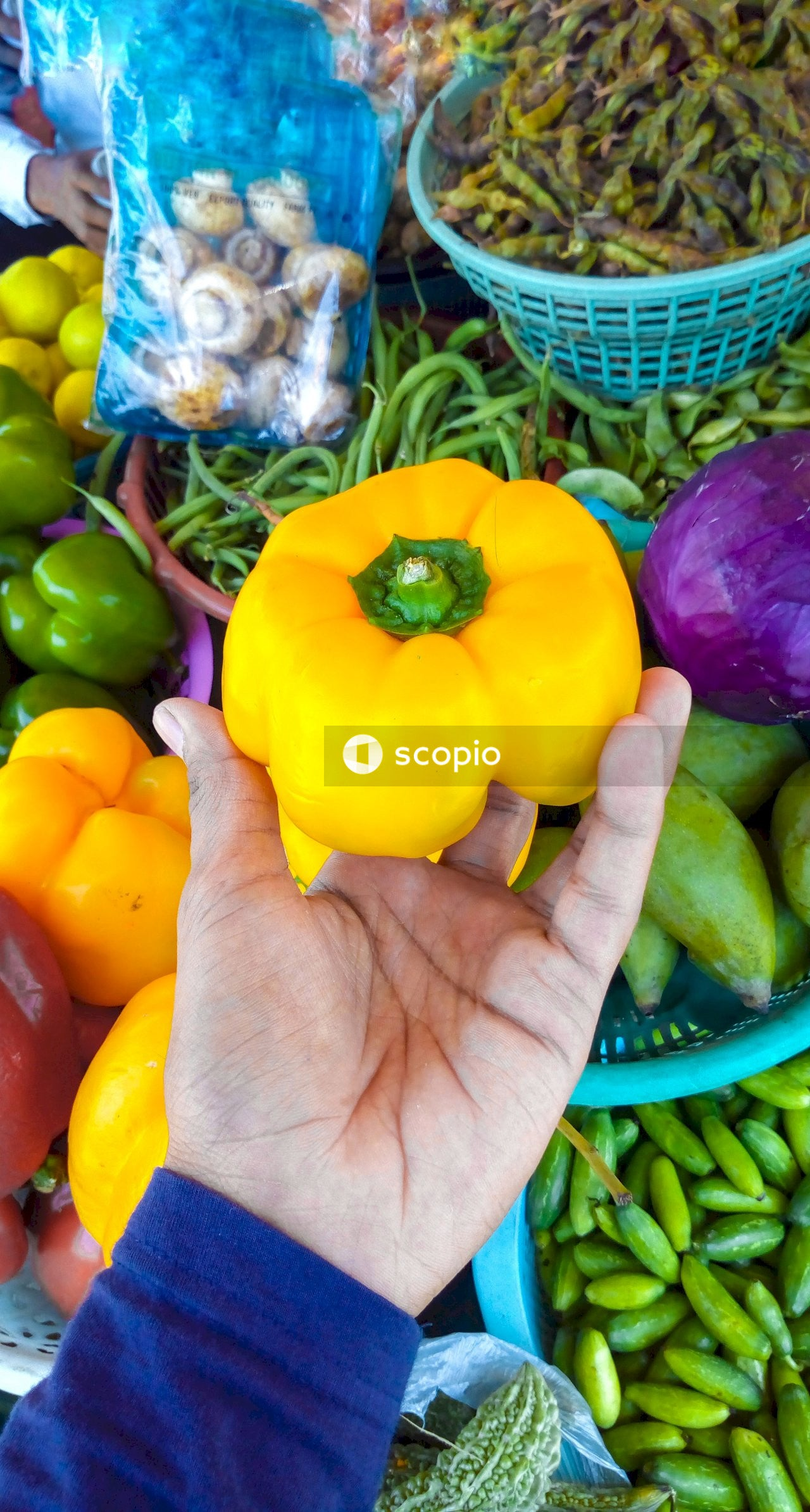 Yellow bell pepper on persons hand