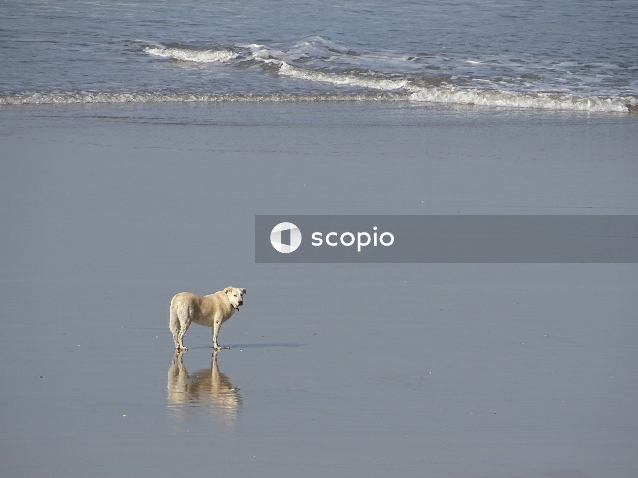 Brown short coated dog on beach
