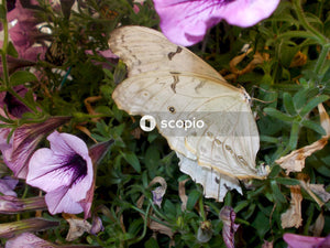 Yellow butterfly perched on purple flower