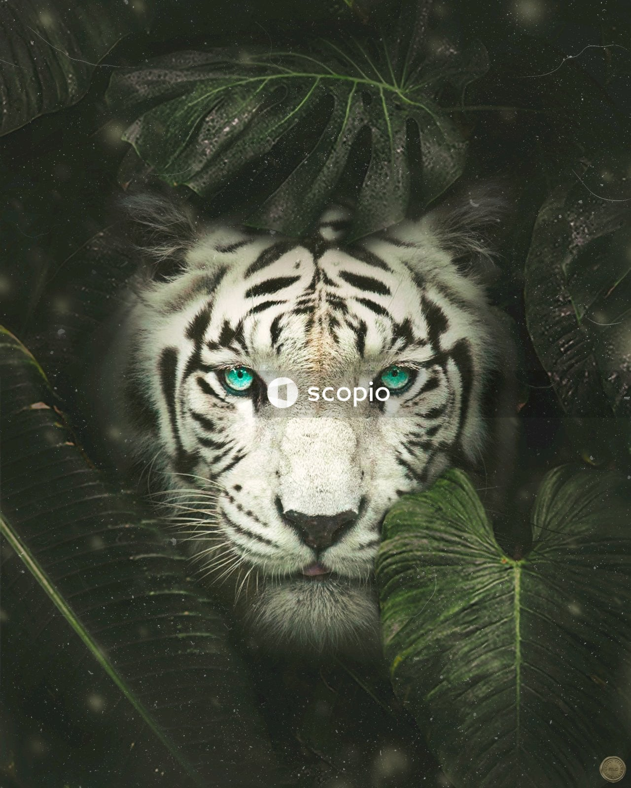 Bengal tiger behind leaves