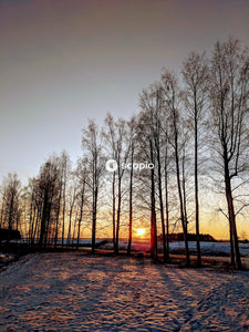 Bare trees on snow covered ground during sunset
