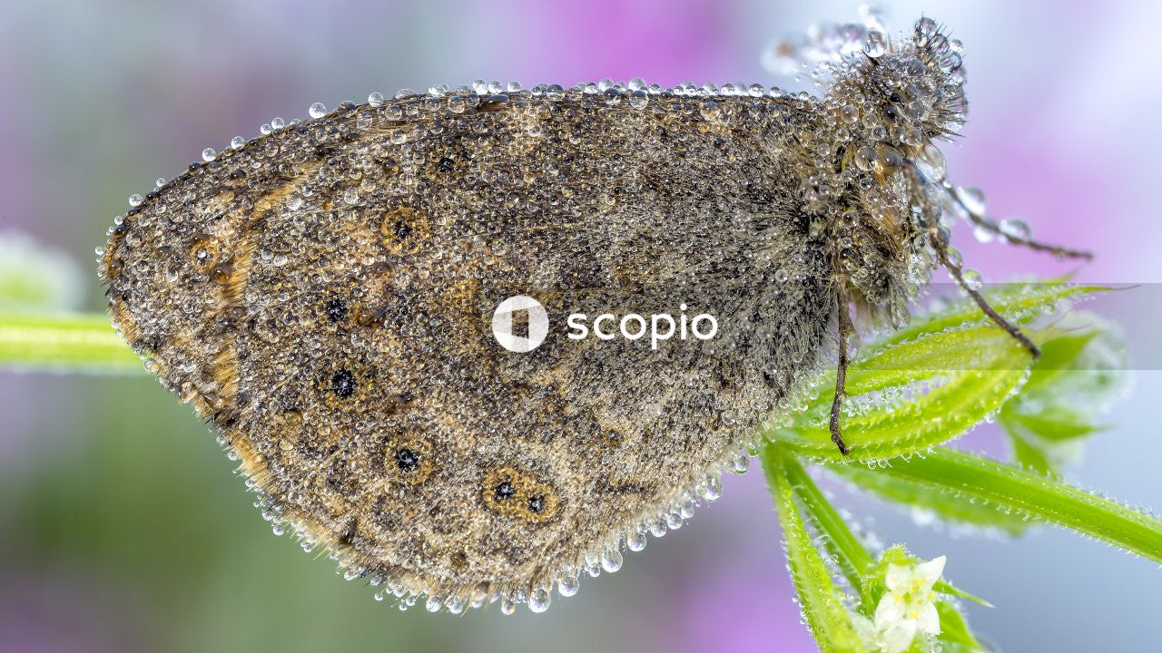 Close-up photography of brown butterfly