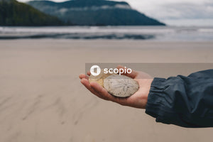 Person holding white and brown seashell